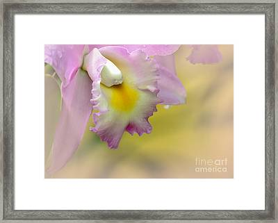 Orchid Whisper Framed Print by Sabrina L Ryan