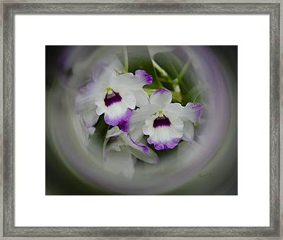 Orchid Wine Swirl Framed Print by Penny Lisowski