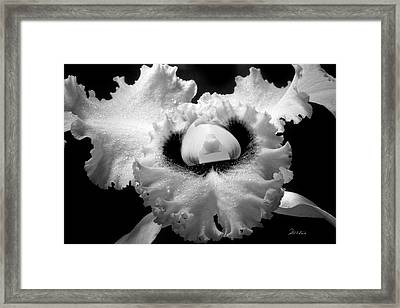Orchid With Black Wings Framed Print