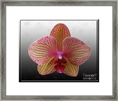 Framed Print featuring the photograph Orchid  With Stars by Donna Brown