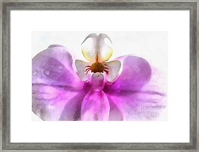 Orchid Zen Framed Print