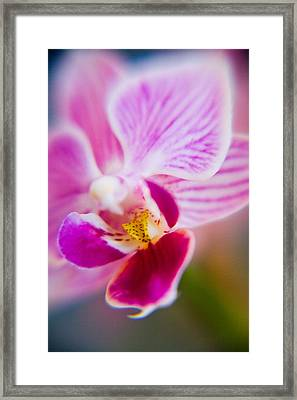Orchide Detail 2 Framed Print by Kim Lagerhem