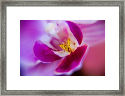 Orchide Detail Framed Print by Kim Lagerhem