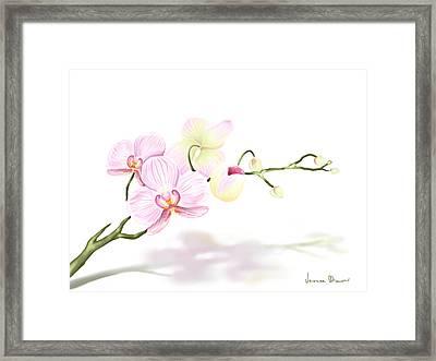 Orchidea Framed Print