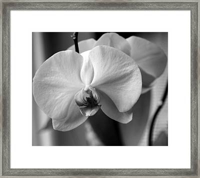Framed Print featuring the photograph Orchidee by Silke Brubaker