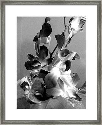 Orchids 2 Bw Framed Print