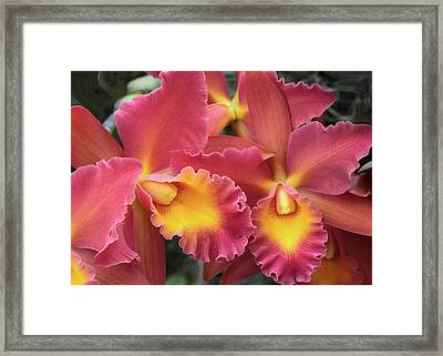 Framed Print featuring the photograph Orchids Ablaze by Harold Rau