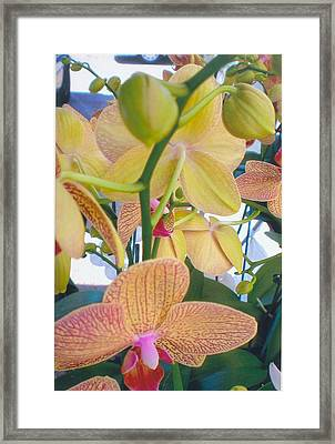 Orchids And Buds Framed Print