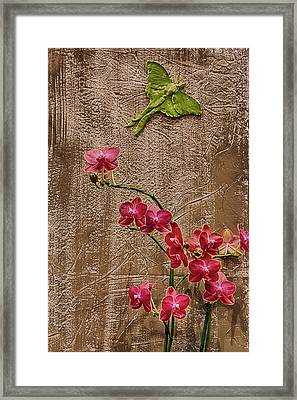 Orchids And Butterfly Framed Print by John Haldane