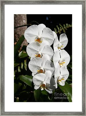Orchids Anna Framed Print by The Art of Alice Terrill