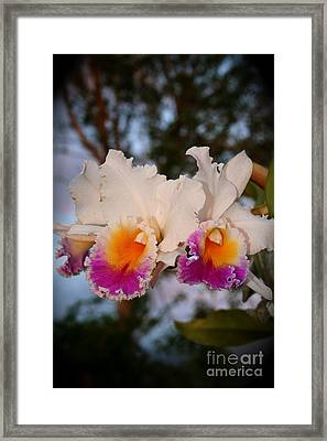 Orchid Elsie Sloan Framed Print by The Art of Alice Terrill