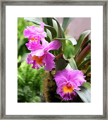 Orchids At The Washington Botanical Framed Print by Carol Kinkead