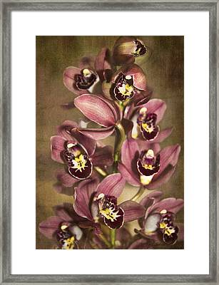 Framed Print featuring the photograph Orchids - Cymbidium  by Kerri Ligatich