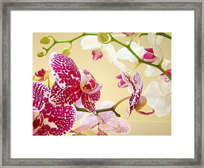 Orchids Floral Art Prints Orchid Flowers Framed Print by Baslee Troutman