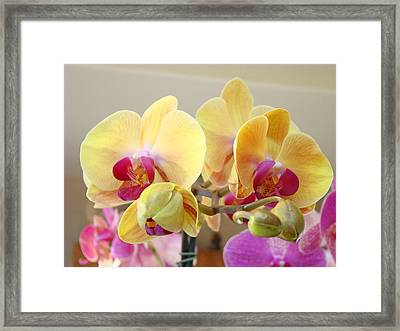 Orchids Floral Fine Art Prints Flowers Framed Print by Baslee Troutman