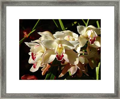 Orchids Framed Print by Glenn McCarthy Art and Photography