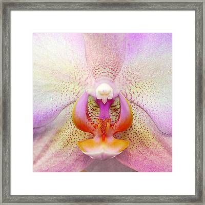 Orchid's Heart Framed Print by Liudmila Di