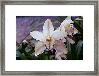 Orchids Framed Print by Heather Provan