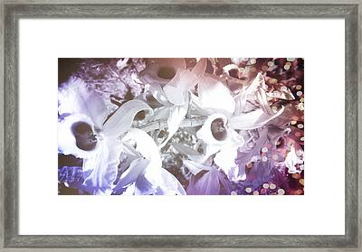 Orchids In Fantasy Colors Framed Print