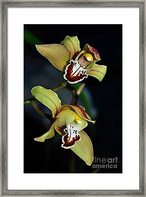 Orchids In The Evening Framed Print by Kaye Menner