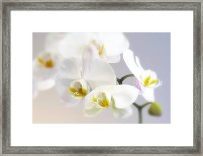 Orchids In The Mist Framed Print