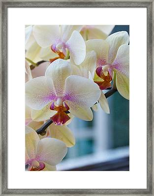 Orchids In The Morning Light Framed Print by Debbie Karnes