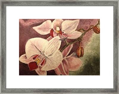 Orchids Framed Print by John Schuller
