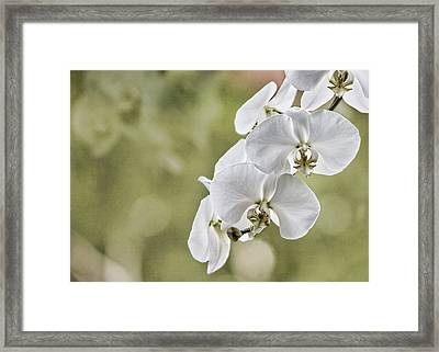 Orchids Framed Print by Karen Walzer