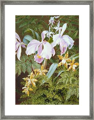 Orchids Framed Print by Marian Emma Chase