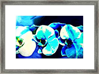 Orchids Of Ranetta Framed Print