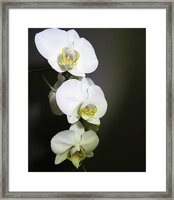 Orchids On Gray Framed Print