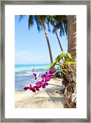 Orchids On The Beach Framed Print by Alexey Stiop