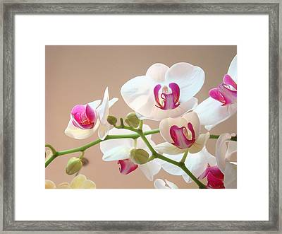 Orchids Pink White Floral Art Prints Framed Print by Baslee Troutman