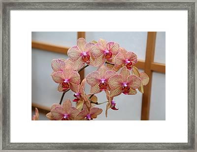 Orchids - Us Botanic Garden - 011318 Framed Print