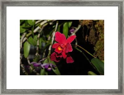 Orchids - Us Botanic Garden - 011320 Framed Print
