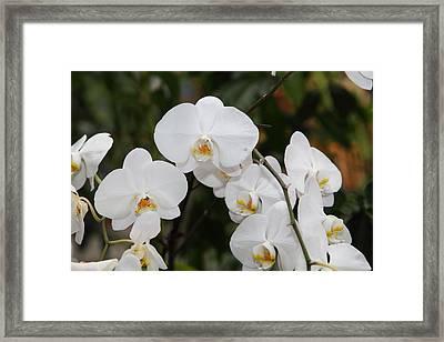 Orchids - Us Botanic Garden - 011327 Framed Print