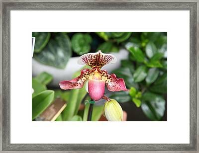 Orchids - Us Botanic Garden - 011332 Framed Print