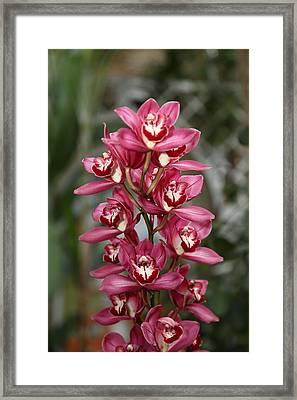 Orchids - Us Botanic Garden - 011348 Framed Print by DC Photographer