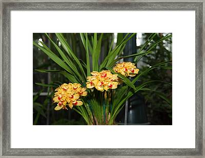 Orchids - Us Botanic Garden - 01137 Framed Print by DC Photographer