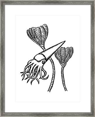 Ordovician Nautiloid And Crinoid Framed Print
