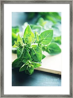 Oregano Framed Print