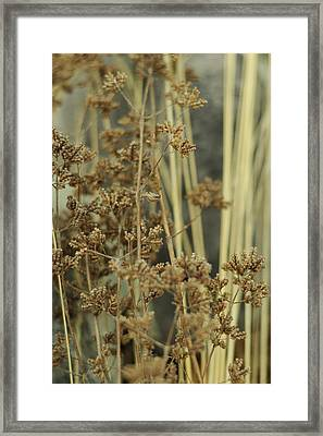 Framed Print featuring the photograph Oregano In Winter by Rebecca Sherman