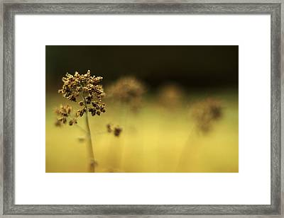Framed Print featuring the photograph Oregano Winter Warmth by Rebecca Sherman