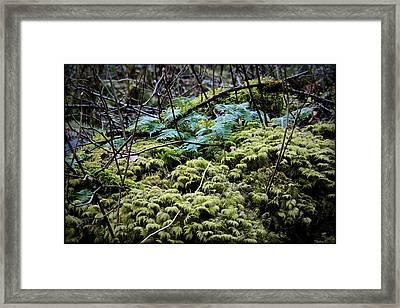 Oregon Forest Floor Framed Print by Milton Thompson