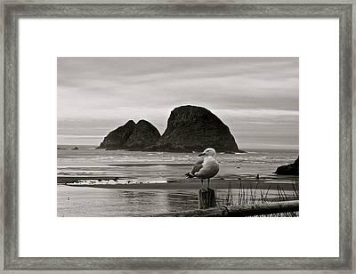 Oregon Shorebirds Framed Print by Milton Thompson