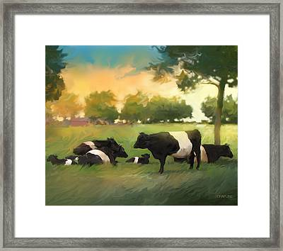 Oreo Cows Framed Print by Curtis Chapline