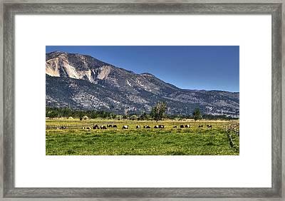 Oreo Cows Framed Print