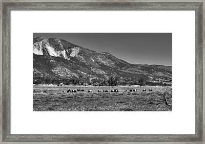 Oreo Cows 2 Framed Print
