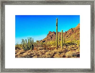 Organ Pipe Cactus National Monument Late Afternoon Framed Print by Bob and Nadine Johnston