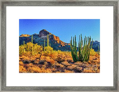 Organ Pipe Cactus National Monument Sunset Framed Print by Bob and Nadine Johnston
